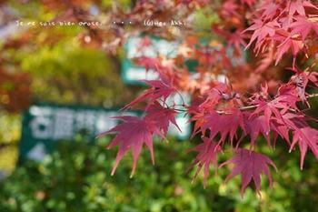 マイルで行く京都旅Next 2020(109).jpg