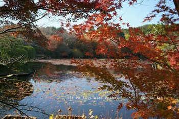 マイルで行く京都旅Next 2020(114).jpg