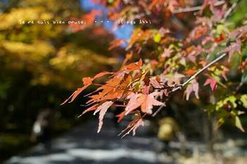 マイルで行く京都旅Next 2020(134).jpg