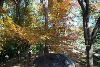 マイルで行く京都旅Next 2020(135).jpg