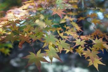 マイルで行く京都旅Next 2020(136).jpg