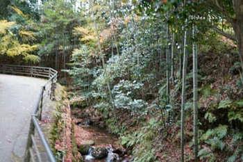 マイルで行く京都旅Next 2020(278).jpg
