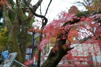 マイルで行く京都旅Next 2020(281).jpg