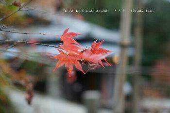 マイルで行く京都旅Next 2020(325).jpg
