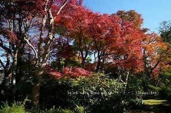 マイルで行く京都旅Next 2020(408).jpg
