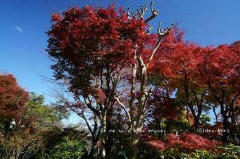 マイルで行く京都旅Next 2020(409).jpg