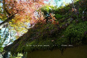 マイルで行く京都旅Next 2020(413).jpg