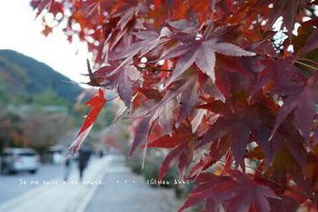 マイルで行く京都旅Next 2020(439).jpg