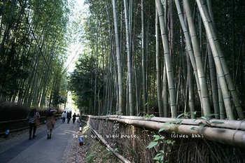 マイルで行く京都旅Next 2020(450).jpg