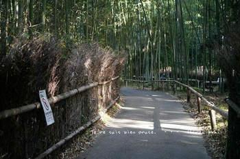 マイルで行く京都旅Next 2020(451).jpg