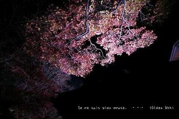 マイルで行く京都旅Next 2020(68).jpg