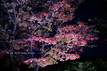 マイルで行く京都旅Next 2020(71).jpg