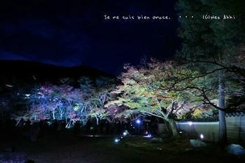 マイルで行く京都旅Next 2020(77).jpg