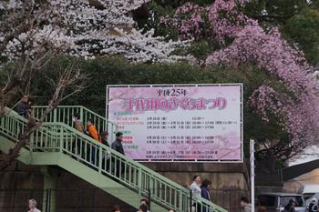 千代田桜まつり(2).jpg