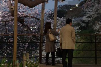 千代田桜まつり(42).jpg
