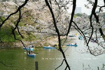 千鳥ヶ淵の桜 2021(13).jpg