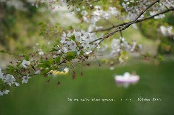 千鳥ヶ淵の桜 2021(2).jpg
