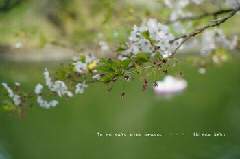 千鳥ヶ淵の桜 2021(3).jpg