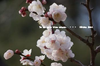 小石川後楽園(10).jpg