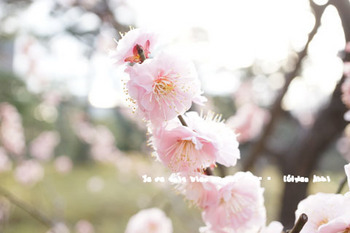 小石川後楽園(12).jpg