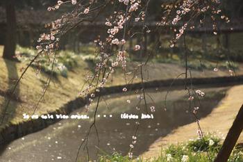 小石川後楽園(15).jpg
