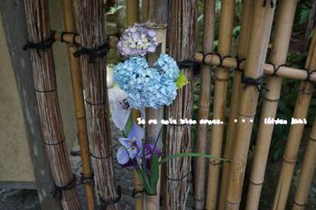 明月院の紫陽花2015(3).jpg