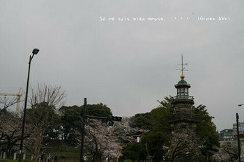 東京の桜2020(2).jpg