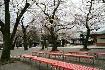 東京の桜2020(20).jpg