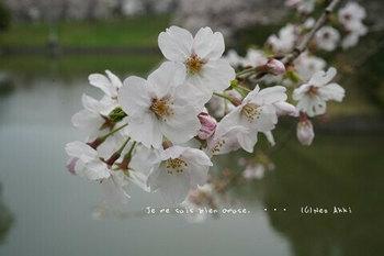 東京の桜2020(28).jpg
