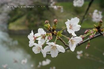 東京の桜2020(30).jpg
