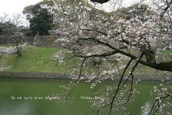 東京の桜2020(33).jpg