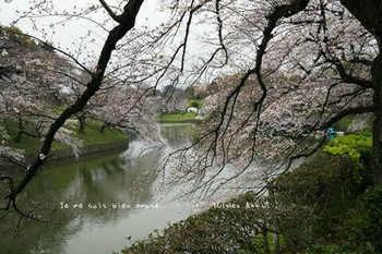 東京の桜2020(34).jpg