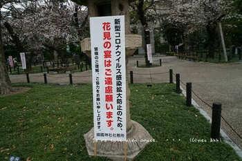 東京の桜2020(5).jpg