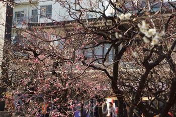 梅祭り(7).jpg