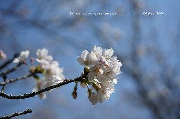 近くの桜 2021(10).jpg