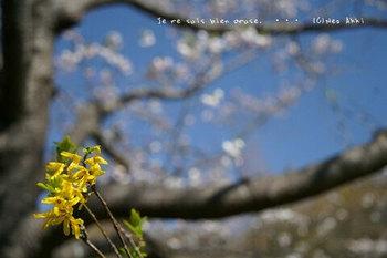 近くの桜 2021(11).jpg