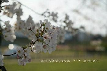 近くの桜 2021(14).jpg