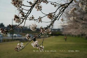近くの桜 2021(17).jpg