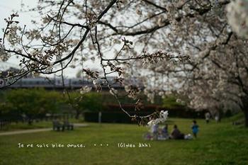 近くの桜 2021(19).jpg