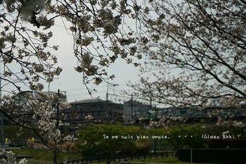 近くの桜 2021(20).jpg