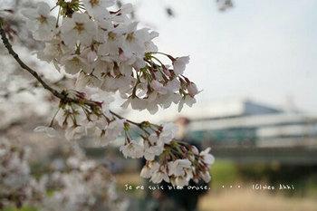 近くの桜 2021(21).jpg