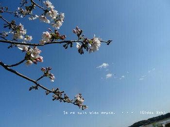 近くの桜 2021(3).jpg