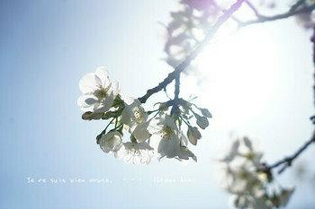 近くの桜 2021(5).jpg