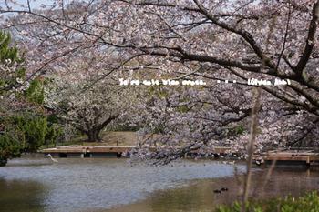 鎌倉の桜2016(13).jpg