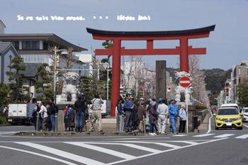 鎌倉の桜2016(2).jpg