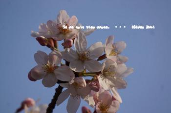 鎌倉の桜2016(39).jpg