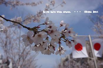 鎌倉の桜2016(6).jpg