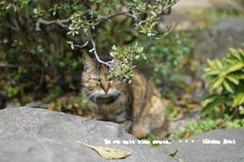 鎌倉の桜2018(10).jpg