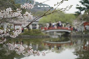 鎌倉の桜2018(24).jpg
