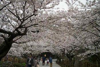 鎌倉の桜2018(32).jpg